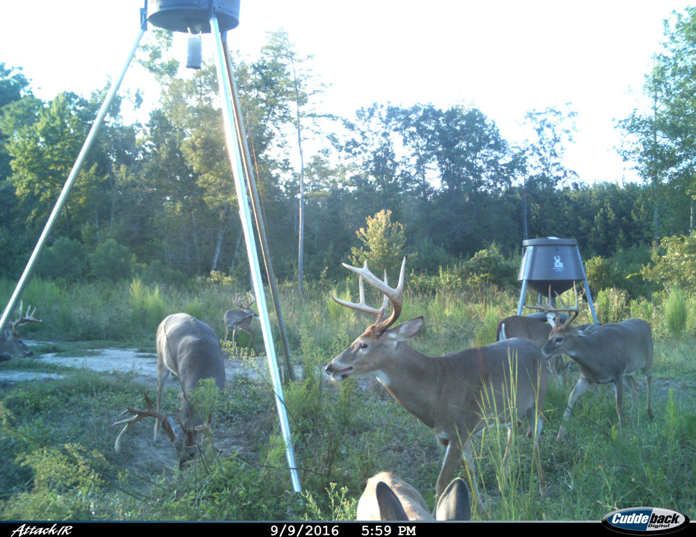 Six bucks one doe at two feeders