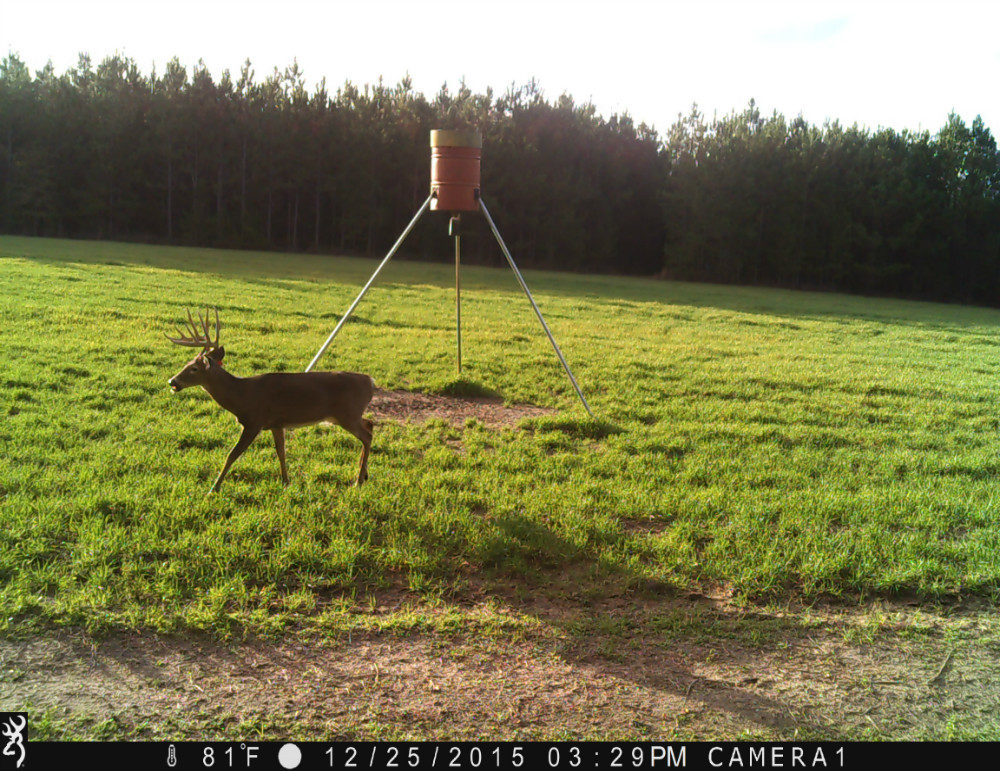 One buck walking past a feeder tripod in field