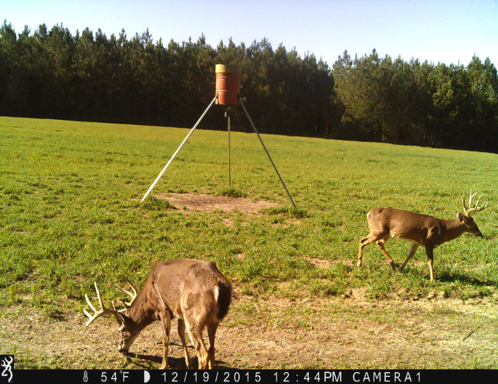 Two bucks in front of feeder tripod one eating grass
