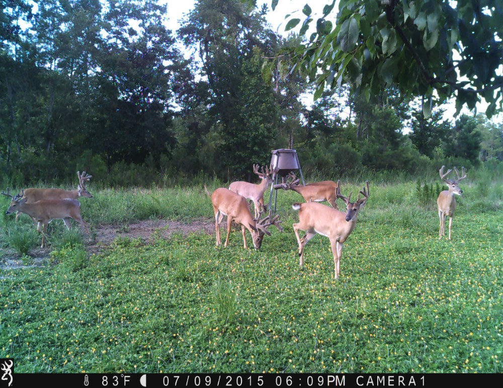 Seven bucks at one feeder in July